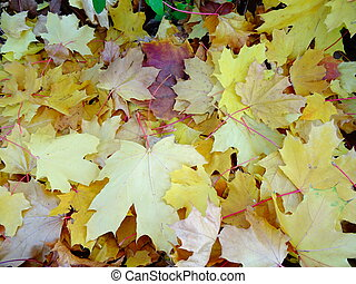 Yellow Autumn Leaves on the Ground