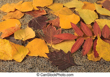 Yellow autumn leaves on the sand
