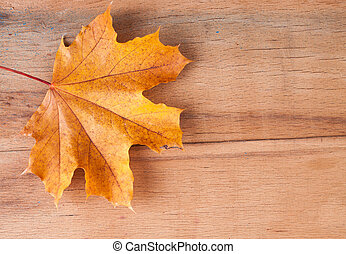 Yellow autumn leaves on wood