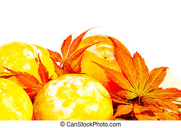 Yellow Autumn plums with scarlet Acer leaves