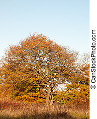 yellow autumn tree leaves background texture branches trunk