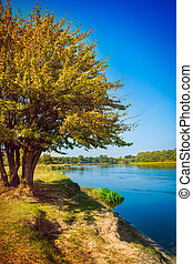 yellow autumn tree on coast of river Instagram stile