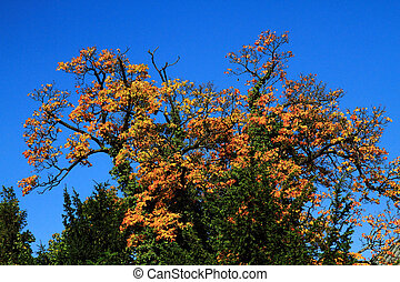 yellow autumn tree with blue sky