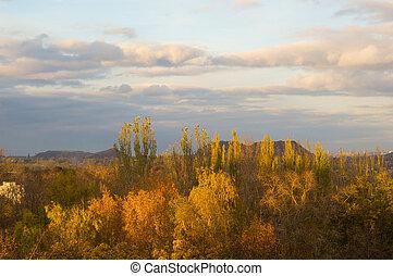 yellow autumn trees in evening sunlight