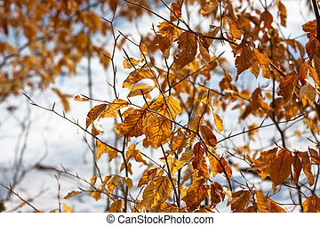 Yellow autumnal leaves with snow