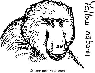 yellow baboon - vector illustration sketch hand drawn with black lines, isolated on white background