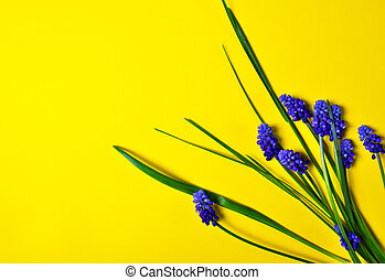 Yellow background with blue flowers, mouse hyacinth