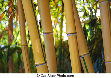 Yellow Bamboo Forest with Sunny Background