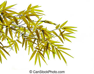 yellow bamboo leaves.