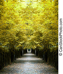 yellow bamboo tunnel.