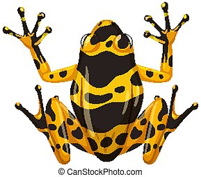Yellow banaded frog isolated on white background
