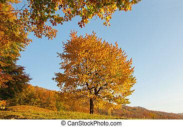 Yellow Beautiful Tree