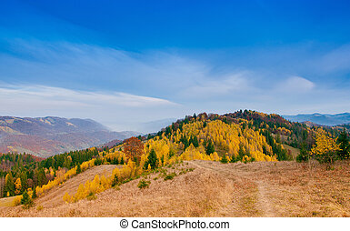 Yellow Beautiful Trees in the mountains
