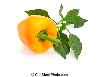 Yellow bell pepper and twig with leaves on a white background