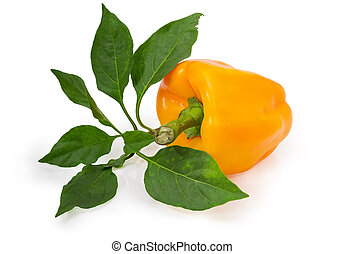Yellow bell pepper and twig with leaves on white background