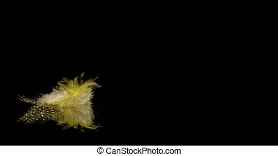 falling yellow bird feather falling onto a reflective black surface.