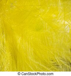 Yellow bird feather