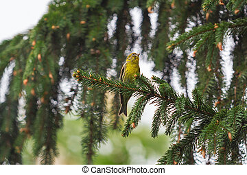 yellow bird on a tree branch