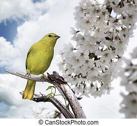Yellow Bird Perching On A Branch