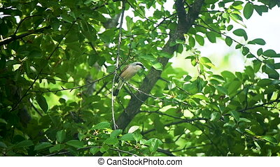 bird sits on a branch