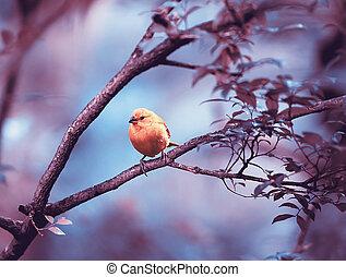 Yellow bird sitting on a branch, wildlife
