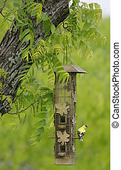 Yellow Bird sitting on a Feeder with Green Trees and Branch