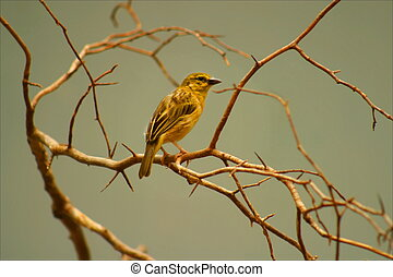 small yellow bird sitting on branches against peaceful pale green background
