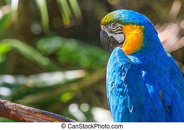 Yellow blue Ara parrot portrait