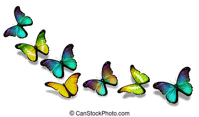 Yellow blue morpho butterflies, isolated on white background