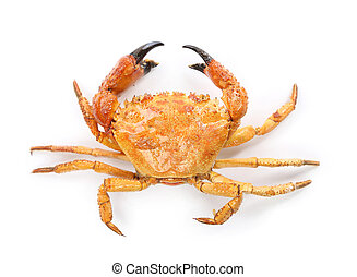 Yellow boiled crab isolated on white background
