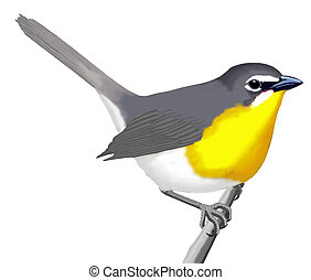 yellow-breasted, charla