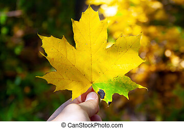 Yellow bright colored leaf in man's hand. Autumn concept