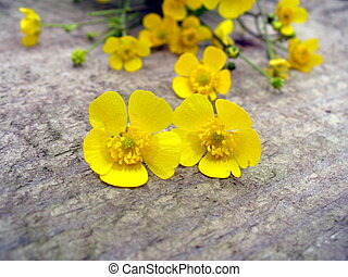 Yellow buttercups on a wooden backg
