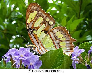 Yellow Butterfly On A Purple Flower