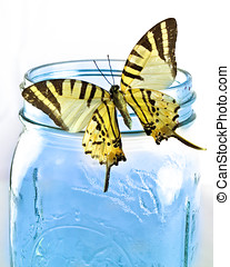 Yellow Butterfly on Blue Jar - Yellow butterfly rests on the...