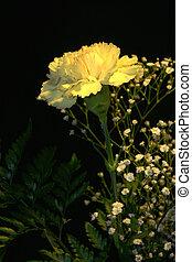 Yellow Carnation