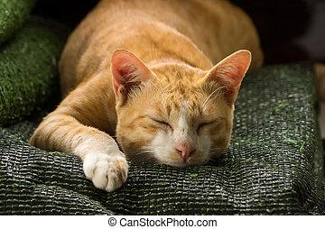 Yellow cat are sleeping