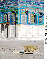Yellow Cat at Dome of the Rock Mosque in Jerusalem