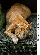 Yellow cat is sleeping