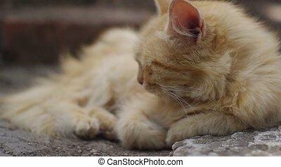 yellow cat resting