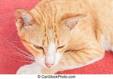 yellow cat sleeping on red carpet