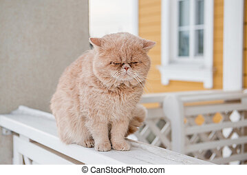 Yellow cat walks on the ledge in winter