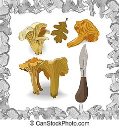 Yellow chanterelle vector illustration. Isolated image on white background