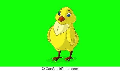 Yellow Chicken Bows Chroma Key - Yellow Chicken Bows....