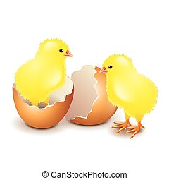 Yellow chicken in egg isolated on white vector