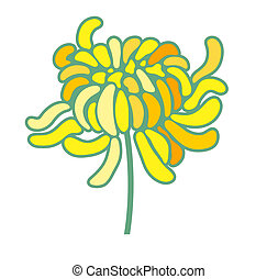 yellow chrysanthemum isolate on the white background