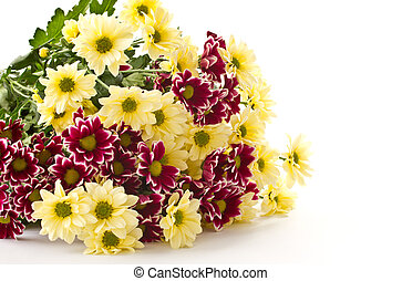 bouquet of yellow and purple chrysanthemums on white background