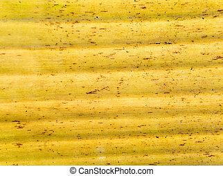 Yellow color and texture of banana tree old leaves