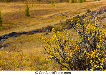 Yellow color of autumn