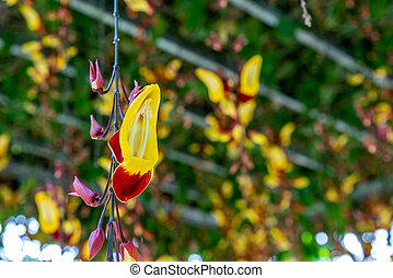 Orchidaceae hanging in the air - Yellow colorOrchidaceae...